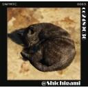 【PCゲーム】Shichigamiによる洋ゲー放送局