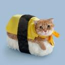 お寿司は出ないお寿司屋さん