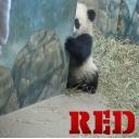 赤いパンダの休憩所