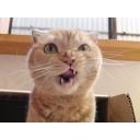 人気の「ぬこぬこ動画」動画 32,221本 -ぬこカフェでまったりまたたび