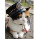 猫が集いし素晴らしき世界