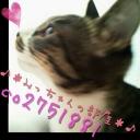 肉球 -♪*みっちゃんの部屋*♪(準備中)