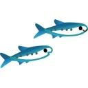 Fish to Shark!