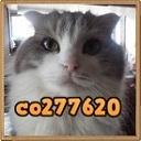 キーワードで動画検索 子猫 - ぐりこDXの自宅動物園な日々