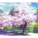 桜と空の下