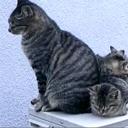 最近良く見かける猫