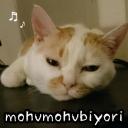 人気の「ぬこ」動画 21,628本 -もふもふ日和