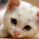 猫好きの生主が送る。