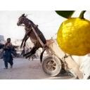 人気の「シンフォニックメタル」動画 787本 -柑橘系放送
