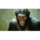 おチンパンジー社長の間