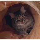 人気の「アマガミ」動画 18,552本 -【あくた】による、飽くなき探求ラジオ。