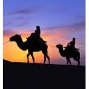 Silk Road Wave