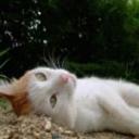 キーワードで動画検索 電装天使ヴァルフォース - 竜宮城