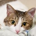 猫実況★プリンさん & たまに主がコスプレする