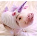 豚好きのゲーム配信