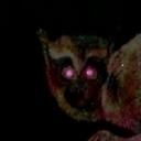 野獣先輩 -【ヴォー】淫夢くん 応援コミュ【真夏の夜の淫夢】