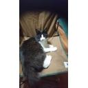 白猫と八匹の仲間たち(暫定)