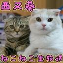 西又 葵:ねこねこ生放送
