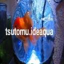 人気の「ペット」動画 4,540本 -深夜の海水魚。