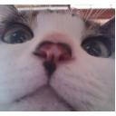 キーワードで動画検索 ニコ生 - ヤトのコミュですよ!