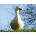 ザウスアイランド鳥獣保護区会計事務所