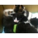 Video search by keyword 猫 - のらにゃこうぇぶ@nikoniko