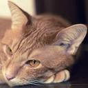 キーワードで動画検索 猫 - Lefty Blue ~ 写真とか猫とか諸々。