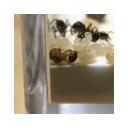 キーワードで動画検索 ホモと見るシリーズ - 迫真アリ観察部