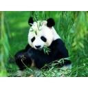 pandaのお部屋