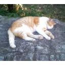 木陰の岩の眠り猫