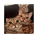 人気の「子猫」動画 9,628本 -アメブロ【友子ちゃんとお兄ちゃん】のコミュニティ
