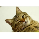 キーワードで動画検索 動物 - 不定期配信 ねこ猫寝子屋