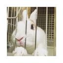 ウサギ定点カメラ