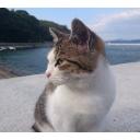 キーワードで動画検索 猫 - taiyou the Free world