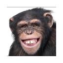 猿人クロ生アウトブレイク