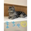 人気の「カイリ」動画 21,880本 -おじじチャンネル