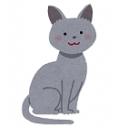 ロシアンブルーは猫の名前。