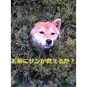 Video search by keyword 実験 - rinrin博士の酔いどれ放送
