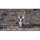 人気の「演奏してみた」動画 229,428本 -チベットスナギツネのちょっとヤバめの昇竜拳