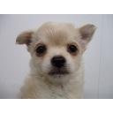 キーワードで動画検索 子犬 - ももちゃんの小さなおうち