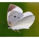 右肩の蝶さんのコミュニティ