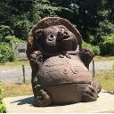 イヌ科タヌキ属タヌキ