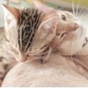 猫奴隷ナースのコミュニティ