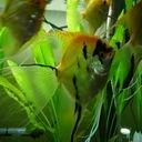 フェレット・熱帯魚観察室