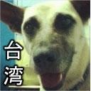 台湾高雄。ジュジュ生 level 3