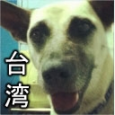 台湾高雄。ジュジュ生 ファイナル