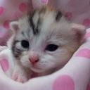 Video search by keyword 子猫 - ♥ニャバクラめろん♥