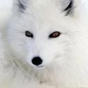 人気の「犬」動画 15,772本 -~ はずこみゅ ~