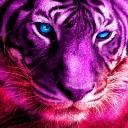Purple Tigerさんのコミュニティ
