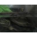 人気の「カブトボーグ」動画 557本 -かめくんプロジェクト
